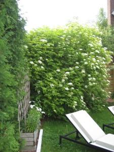 Design extérieur - jardin