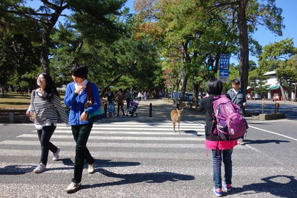 Nara Park, Nara. © Sylvie Pinsonneault, 2014